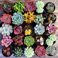 Succulents Cacti Home Garden Indoor Outdoor Boho Desert Style Home Decor Indoor Plants, Potted Plants, Indoor Garden, Garden Plants, Indoor Outdoor, Cacti And Succulents, Planting Succulents, Planting Flowers, Gardening Hacks