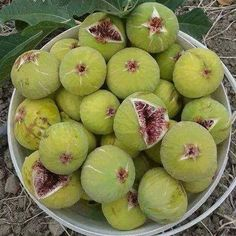 Fig 'Little Ruby' (Ficus carica) Fresh Figs, Fresh Fruit, Fruit And Veg, Fruits And Vegetables, Growing Fruit Trees, Fruit Photography, Beautiful Fruits, Fruit Drinks, Tropical Fruits