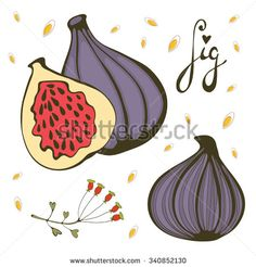 Hand Drawn Figs. Bio Food Illustration In Vector Format - 340852130 : Shutterstock