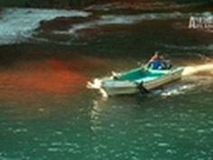 Blood Dolphins- Exposing Dolphin Slaughter    this makes me sick and I want to kill these people.