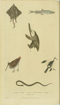 Various birds, fish, a snake, and a sloth, via Flickr.