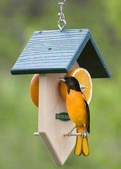 Fresh fruit bird feeder