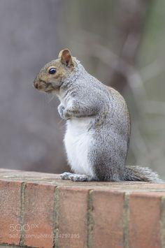 Mr.Squirrel de filsaahd