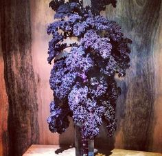 Purple kale