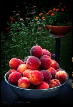 A wonderful taste of freshly picked peaches