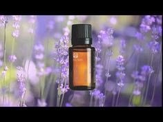 You can shop the product from the link! The natural, floral aroma of Epoch Lavender essential oil provides a sense of tranquility and peace. Essential Oils For Skin, Epoch, Lavender Oil, Aromatherapy, Perfume Bottles, Nu Skin, Sleep Better, Stay Calm, Pure Products