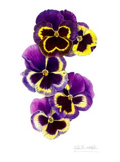 Purple pansies... My grandma will love this!