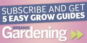 10 Tips for Growing Awesome Tomatoes: Organic Gardening