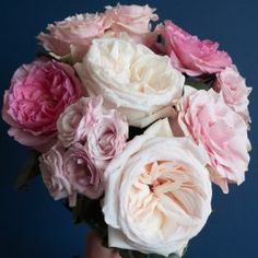 Some of our and our client's favorite pink rose varieties. The varieties featured here are:Pink Mondial, White O'hara, Mayra's Rose, and Pink Majolica. Pink Garden, Lush Garden, Bridal Bouquet Fall, Wedding Bouquets, Early Grey, Floral Design Classes, Rose Varieties, Spray Roses, Bonito