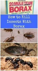 Keep Pests away using Borax - Top 10 Most Creative Household Uses for Borax