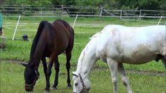 [HD] Horses are beautiful 马是美丽的 馬は美しいです 말은 아름답다 ม้ามีความสวยงาม الخيول ه...