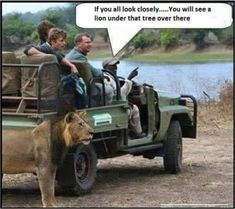 """""""If you look carefully, you can see a lion under that tree. Funny Jokes In Hindi, Silly Jokes, Twisted Humor, Cute Funny Animals, Funny Fails, Funny Comics, Funny Photos, Funny Texts, I Laughed"""