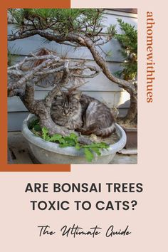 Is your bonsai tree safe for a cat? This guide reveals everything you need for cats and bonsai tree plants to live in harmony in your home. Houseplants Safe For Cats, Toxic Plants For Cats, Cat Plants, Bonsai Plants, Easy Care Indoor Plants, Bonsai Tree Types, Indoor Trees, Miniature Plants, Plant Species