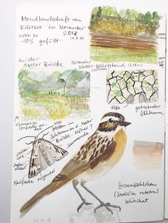 How a nature journal can help you to experience nature and get better at observing and drawing – Julia Bausenhardt Illustration + Nature Sketching Nature Sketch, Nature Drawing, Drawing Drawing, Sketchbook Inspiration, Art Sketchbook, Journal Inspiration, Journal Ideas, Botanical Drawings, Botanical Illustration
