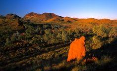 Niewiarygodna kraina Terra Australis