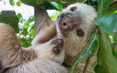 Adventures With Sloths: an Animal Lover's Guide to Costa Rica