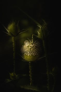 Paul Barson Photography » Beauty From The Beast