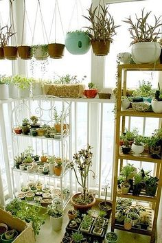 indoor plants  I would love these around a window...
