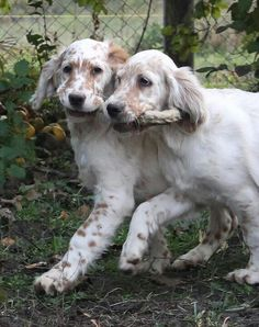 Two beautiful pups
