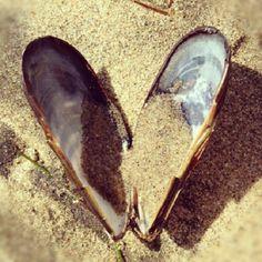 Shell #Hearts <3