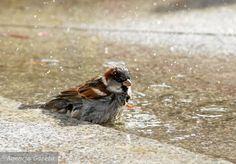 Zdjęcie numer 2 w galerii - Jak zostać miejskim ornitologiem. Za oknem ptaków jest więcej niż w puszczy