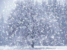 the cinderella project: because every girl deserves a happily ever after: Winter Wonderland