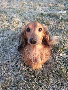 #Lostdog 7-13-14 #Rockford #IL ANGELA JOHNSON-COWLING https://m.facebook.com/story.php?story_fbid=847852915227137&id=100000073091107
