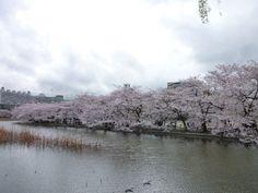 """""""Shinobazunoike""""(Parque), Ueno Tokyo Japan"""
