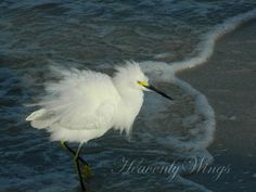 Fun Fluffy Beach Photography Black White and by HeavenlyWings, $25.00