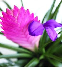1000 images about plantas de interior on pinterest - Plantas de sol directo ...