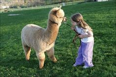 Aww.. baby lama. i will own a lama one day!