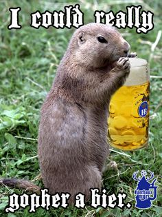 I could really gopher a bier.