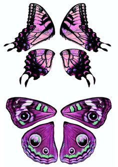 Discover recipes, home ideas, style inspiration and other ideas to try. Butterfly Drawing, Butterfly Crafts, Butterfly Wings, Paper Art, Paper Crafts, Arts And Crafts, Donut Decorations, Fairy Wings, Doll Repaint