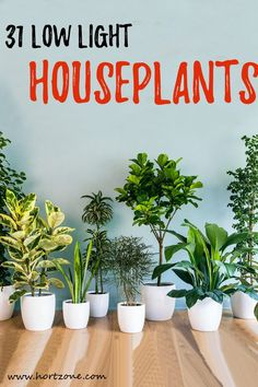 Incorporating your interior spaces with houseplants enhances your quality of life. However, the biggest challenge is finding low light houseplants that can be productively grown indoors. Indoor Plants Low Light, Best Indoor Plants, Low Light Houseplants, Artificial Light For Plants, Best Indoor Trees, Easy Care Indoor Plants, Indoor Tropical Plants, Indoor Grow Lights, Indoor Flowering Plants