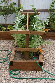 Arbors Trellis, Diy Trellis, Garden Trellis, Rasberry Trellis, Blackberry Trellis, Garden Yard Ideas, Veg Garden, Fruit Garden, Raised Garden Beds Cinder Blocks