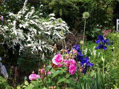 Summer flowering shrubs and roses