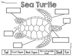Sea Turtle Monogram SVG, Sea Turtle SVG, Sea Turtle