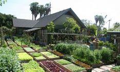 O projeto de ter uma fazenda urbana começou na década de 80.