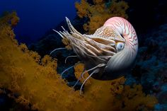 Incredible Photographs of Fractals Found in the Natural World.Nautilus shell