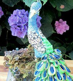 peacock 19