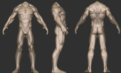 65 Best Male Anatomy Reference images in 2014 | Anatomy