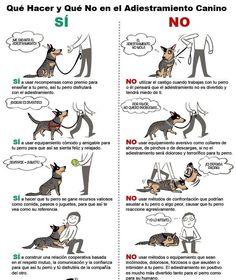 ¿ Conoces las bases para adiestrar a tu perro ?... Lee esto.