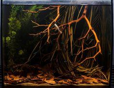 242 Best Aquarium Blackwater Images In 2019 Fresh Water Soda
