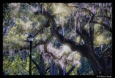 Back-lit scene, Audubon Park, New Orleans | Flickr