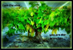 Learning to abide in Christ, the True Vine...