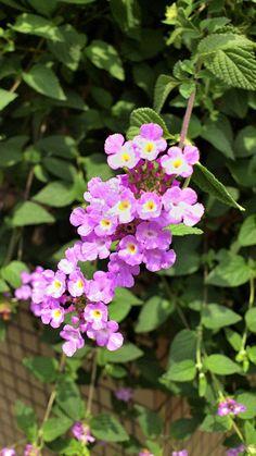 名前の知らない花。The flower not to know of the name.