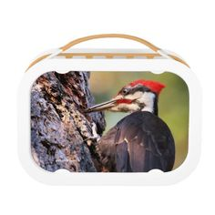 #beauty - #Beautiful Pileated Woodpecker on the Tree Lunch Box