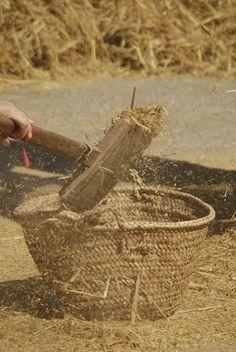 Amb la pala s'aparta l'arròs i s'omple el cabàs.