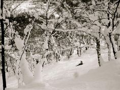 Powder Day in Niseko, Japan