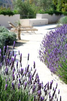 A lavender flanked pathway in mallorca. Unique Gardens, Back Gardens, Terrace Design, Garden Design, Front Path, Outdoor Living Areas, New Builds, Where The Heart Is, The Fresh